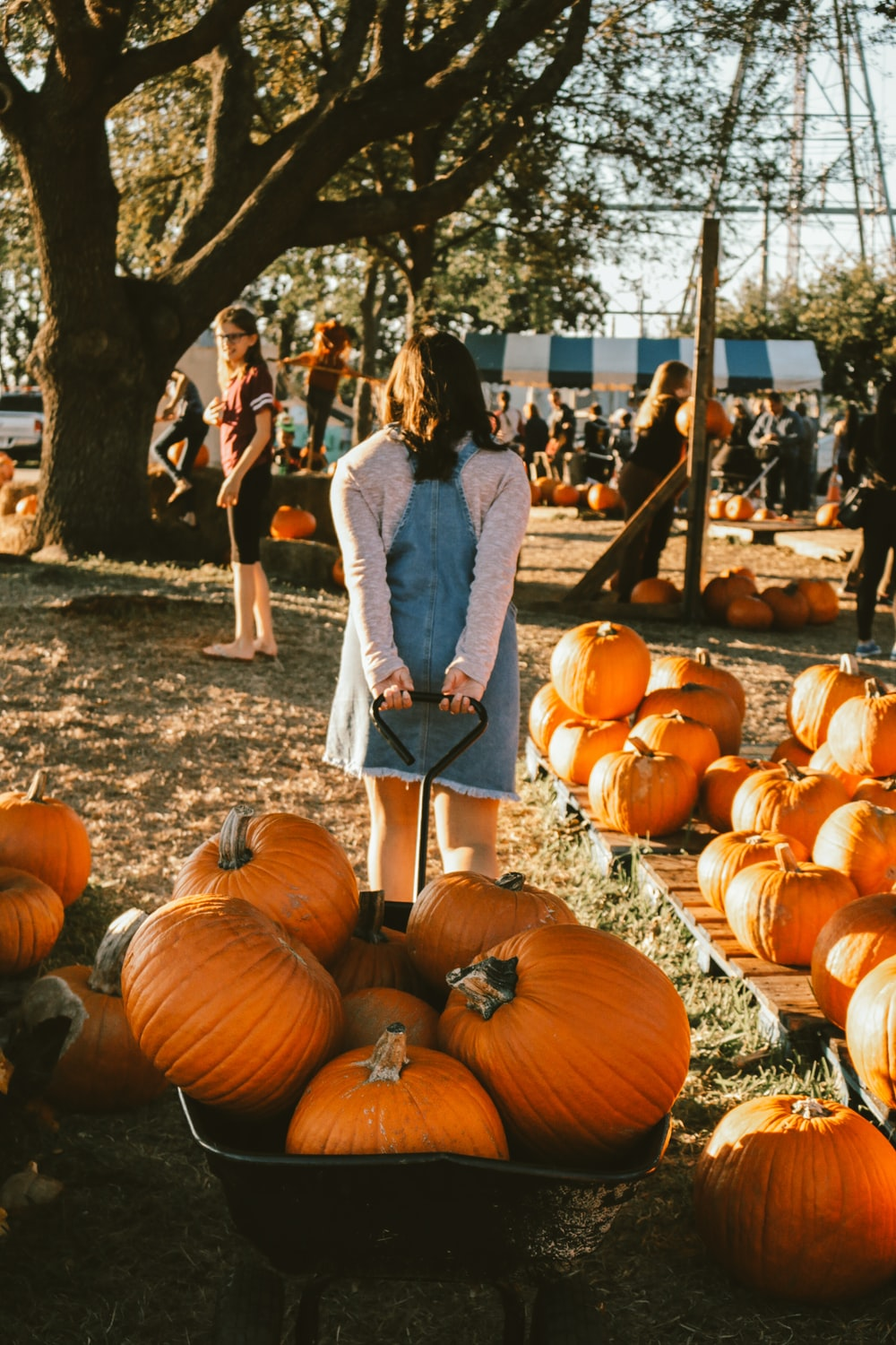 woman pulling wagon with pumpkins