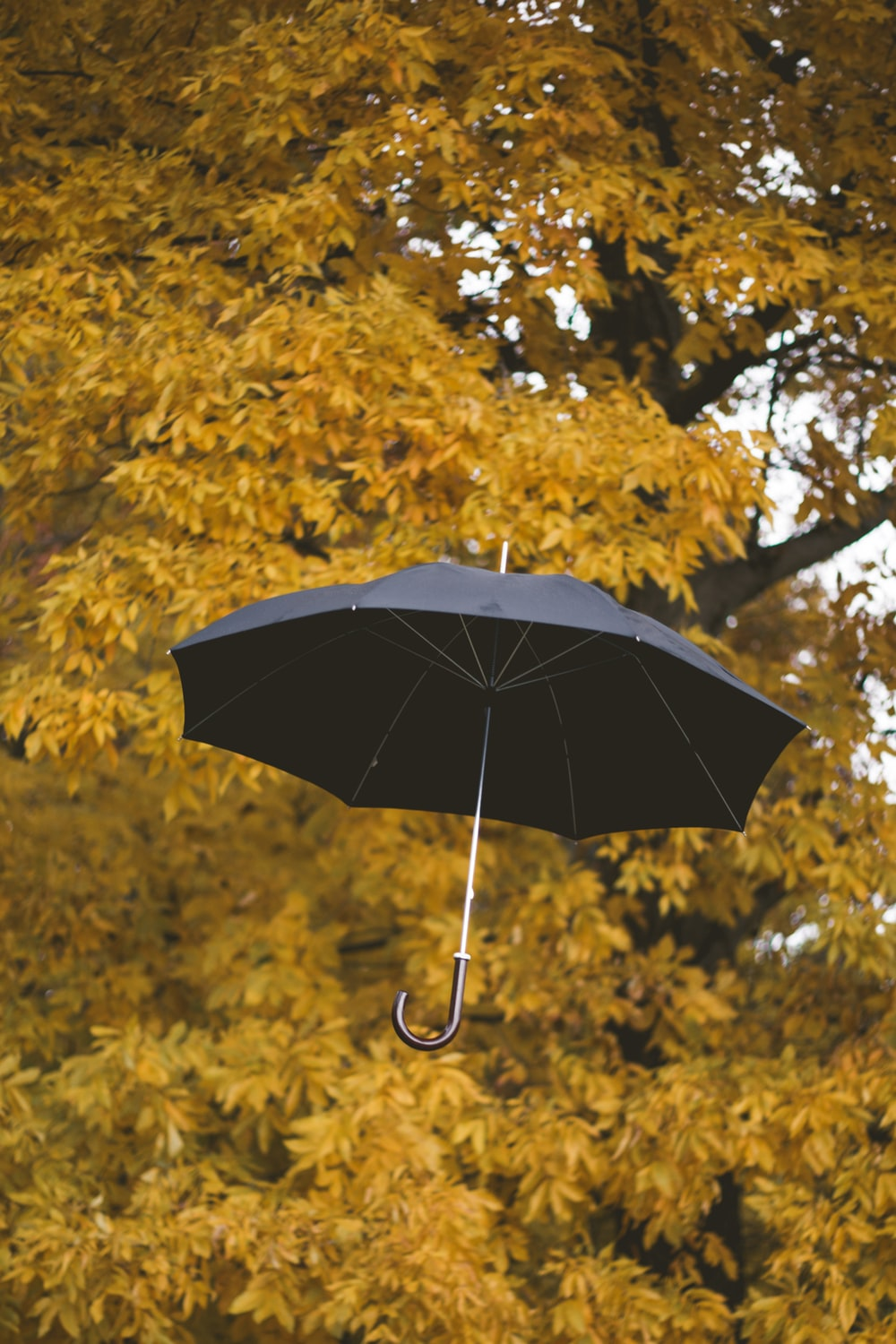floating black umbrella