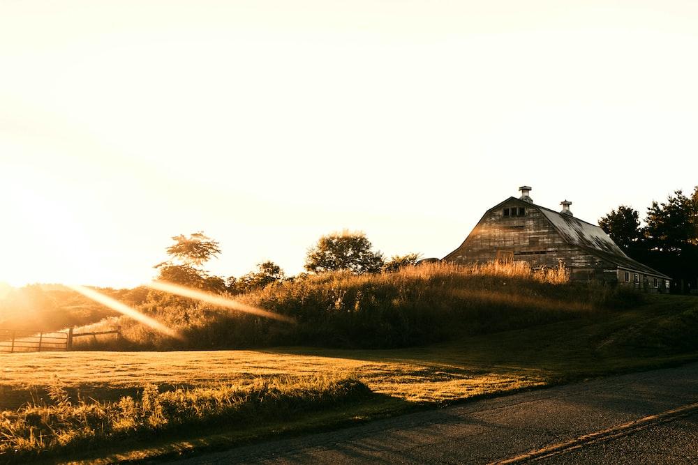green field durig sunrise