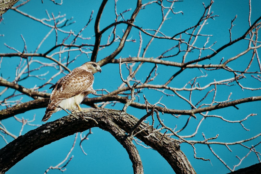 brown bird perched on bare tree branch