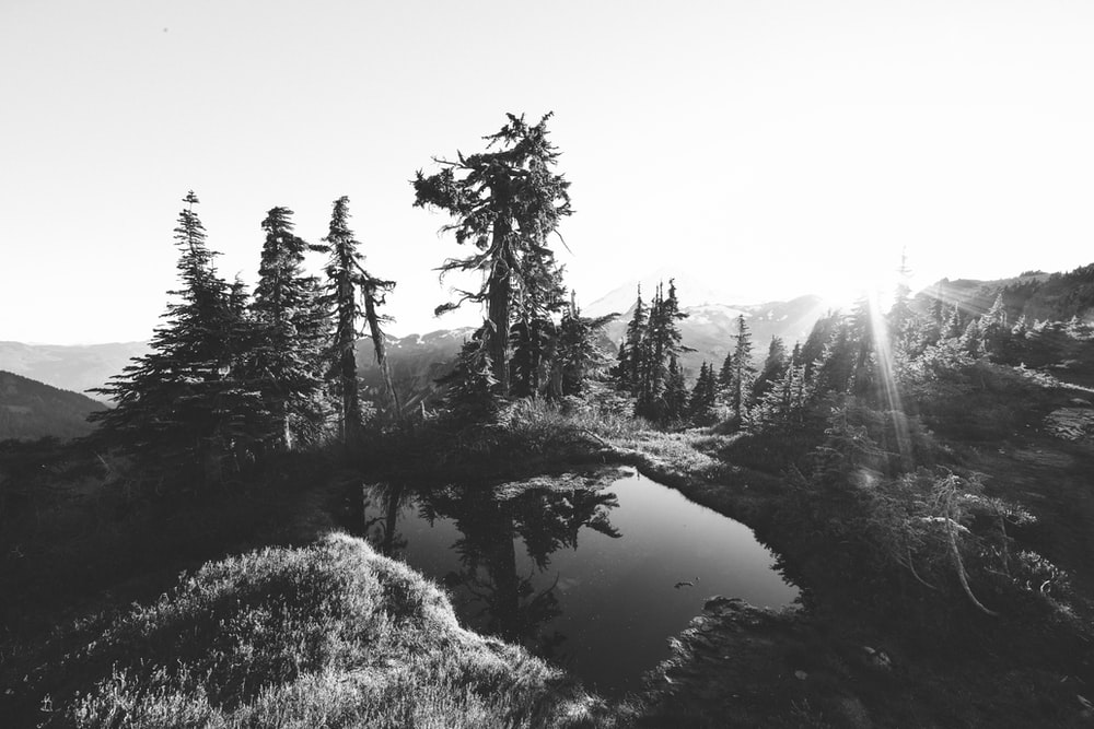 grayscale photography of lake near trees