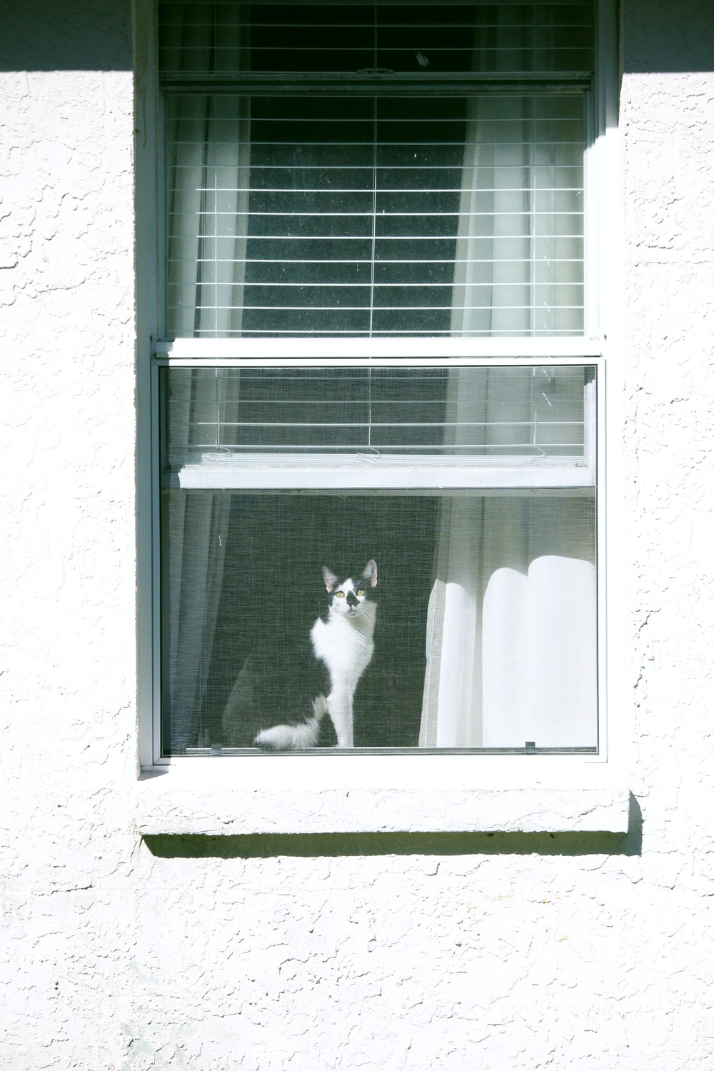 black and white cat on window during daytime