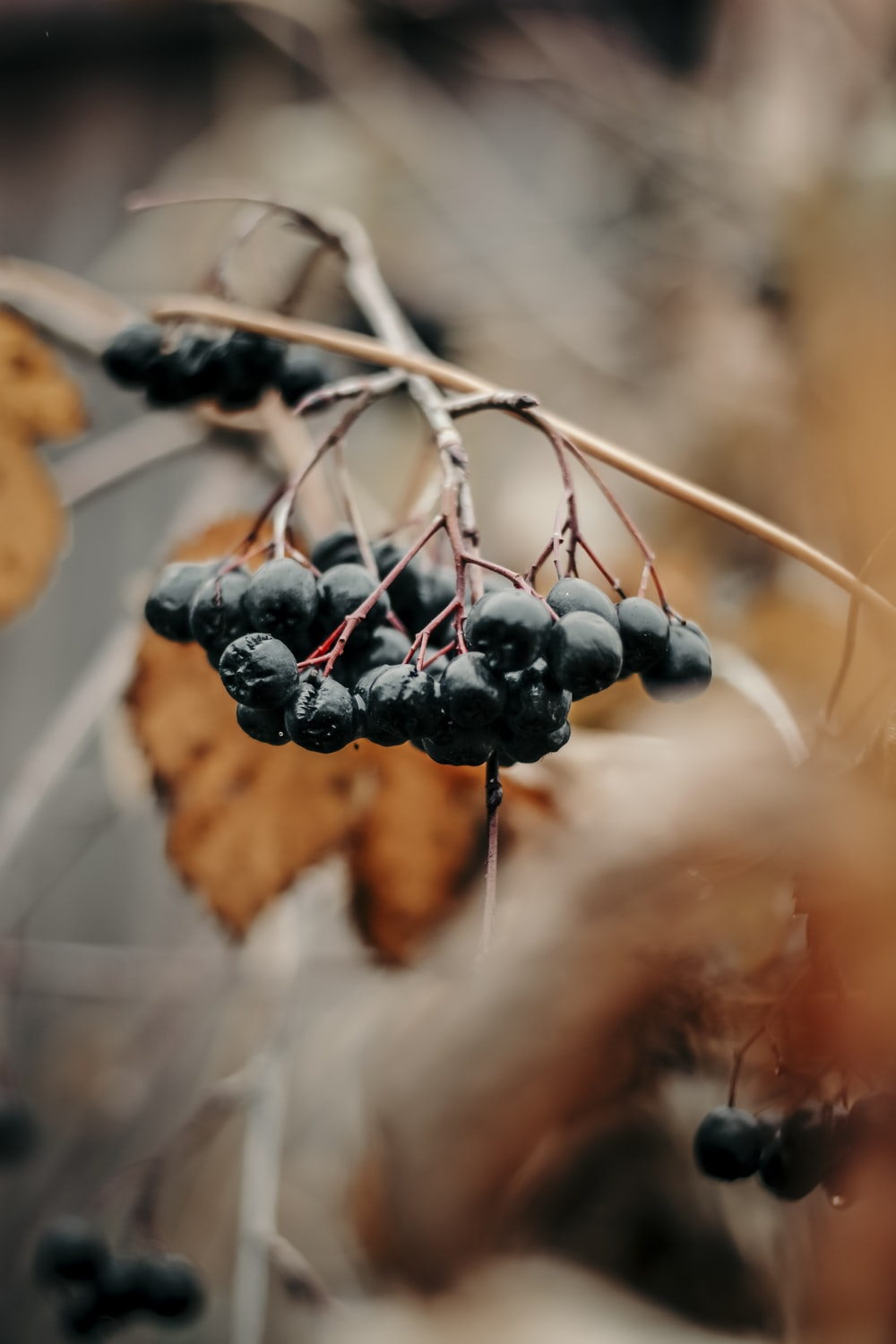 selective focus photography of black currants