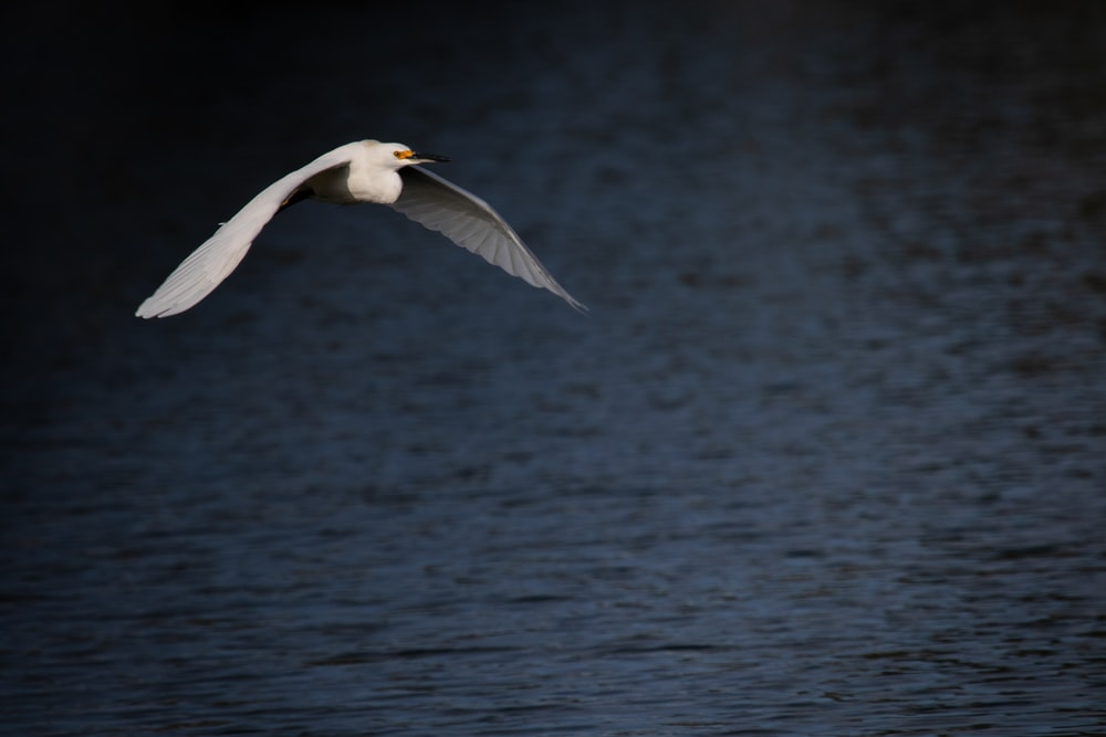 flying bird above body of water during daytime