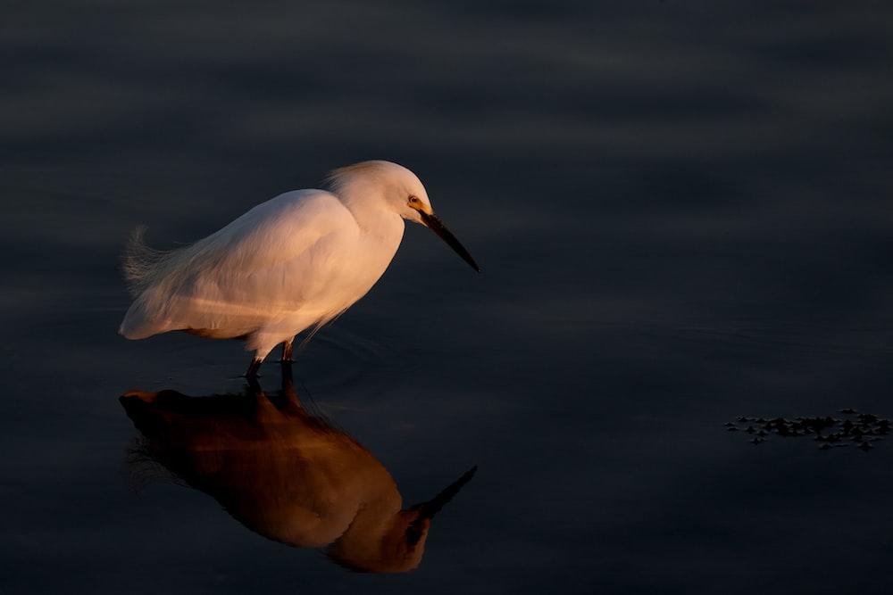 white bird on black surface