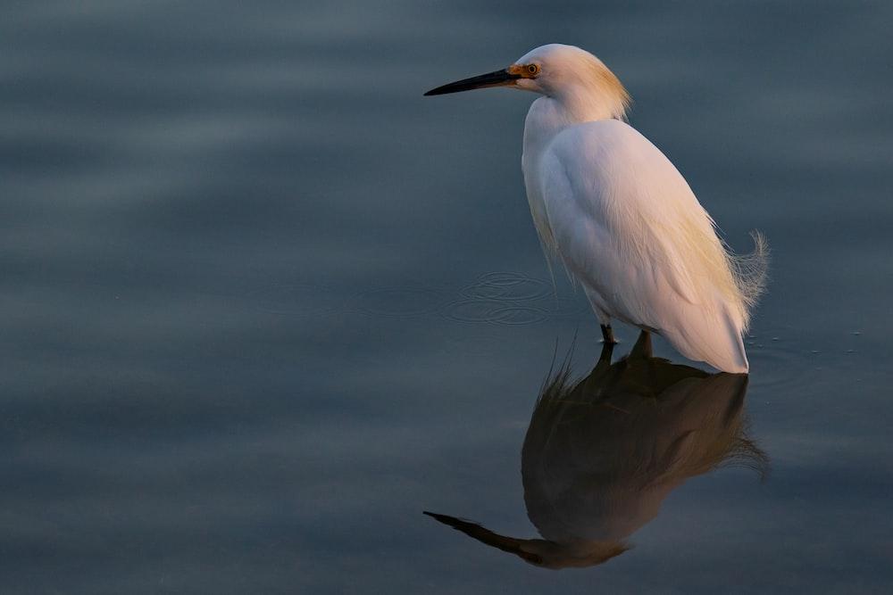 white bird in water