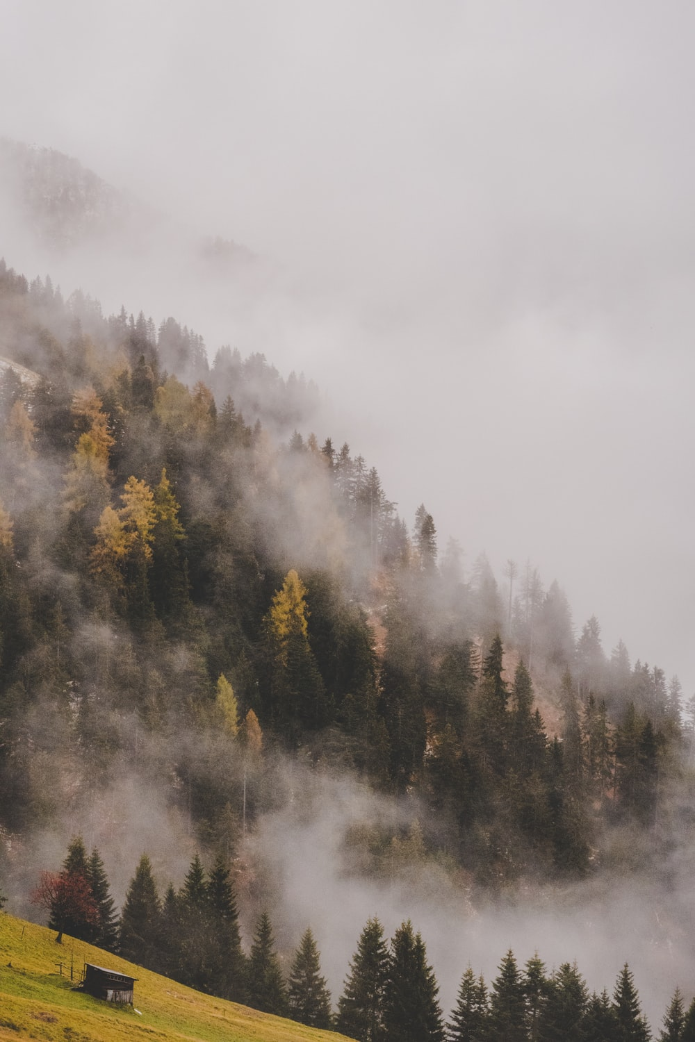 forest covered with smoke
