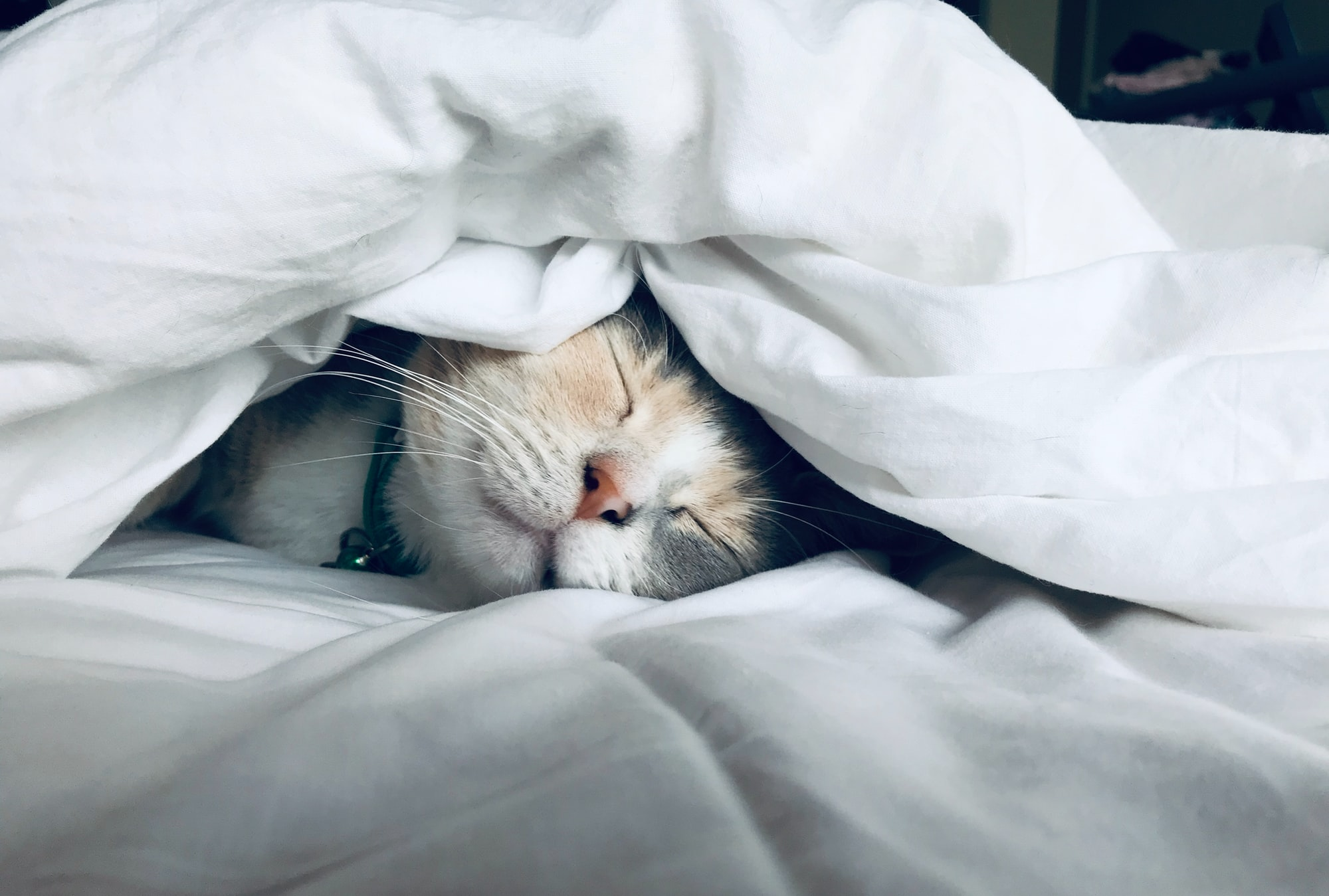 9 Heroic Cats Prove They Do More Than Sleep All Day