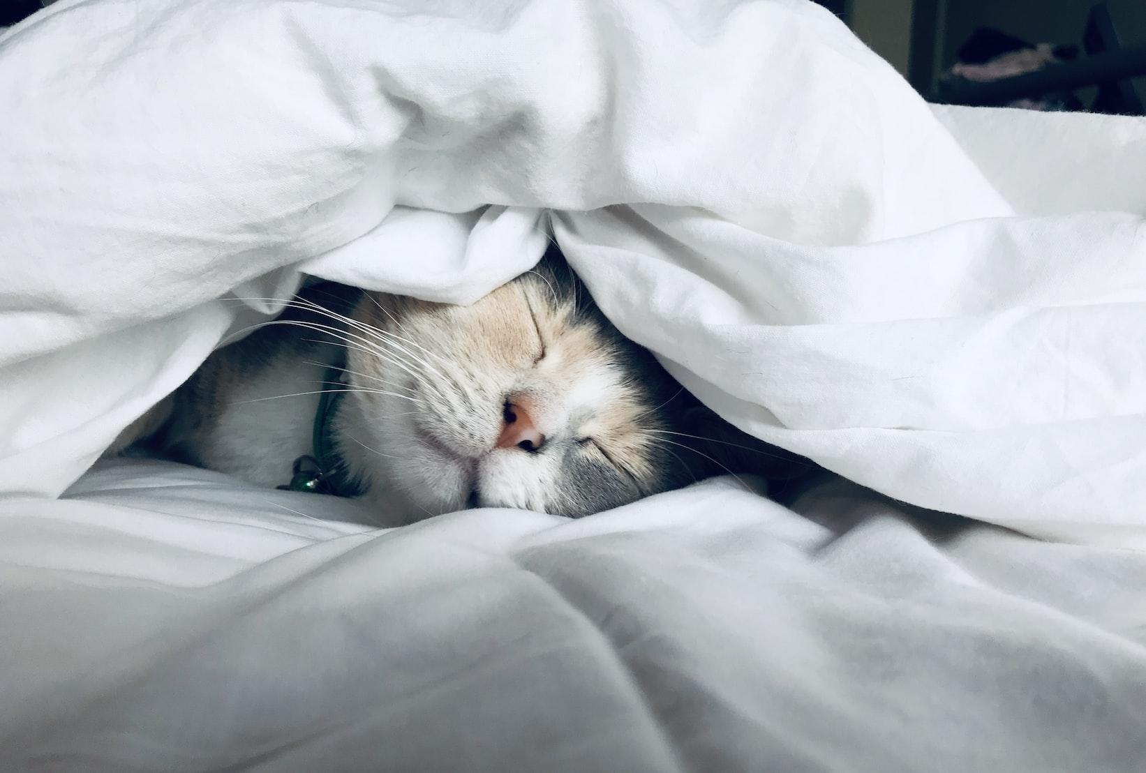 昼寝はしてもオッケー!