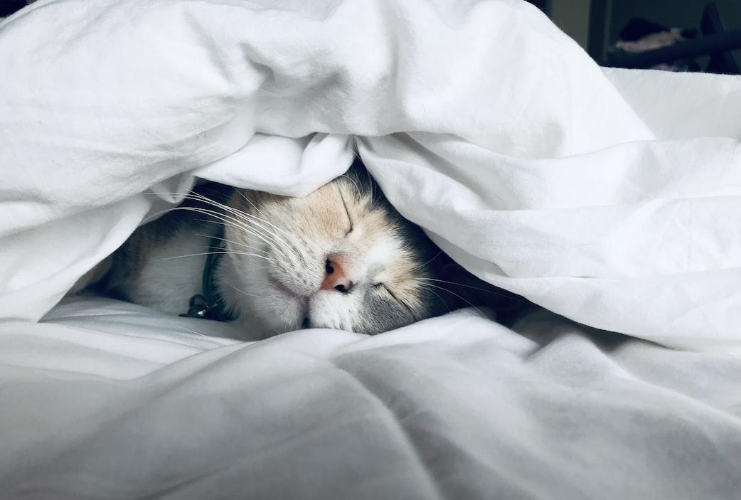 white cat sleeps under white comforter