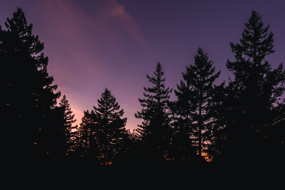purple and pink sky over pine trees at dusk