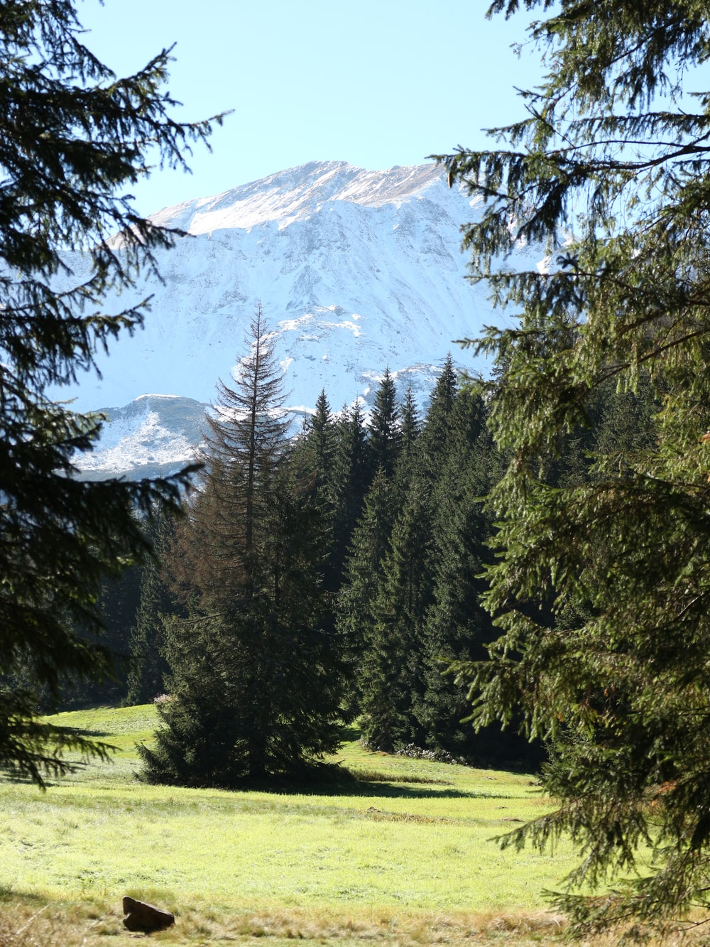 forest overlooking snow capped mountain range