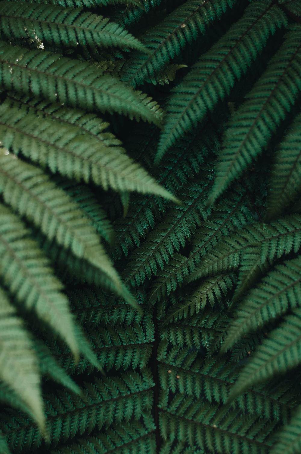 closeup photo of fern plant