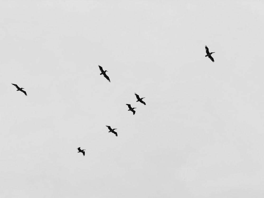 flight of birds