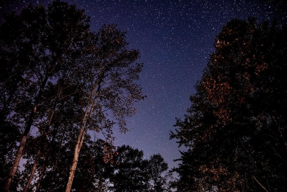 trees under starry skies