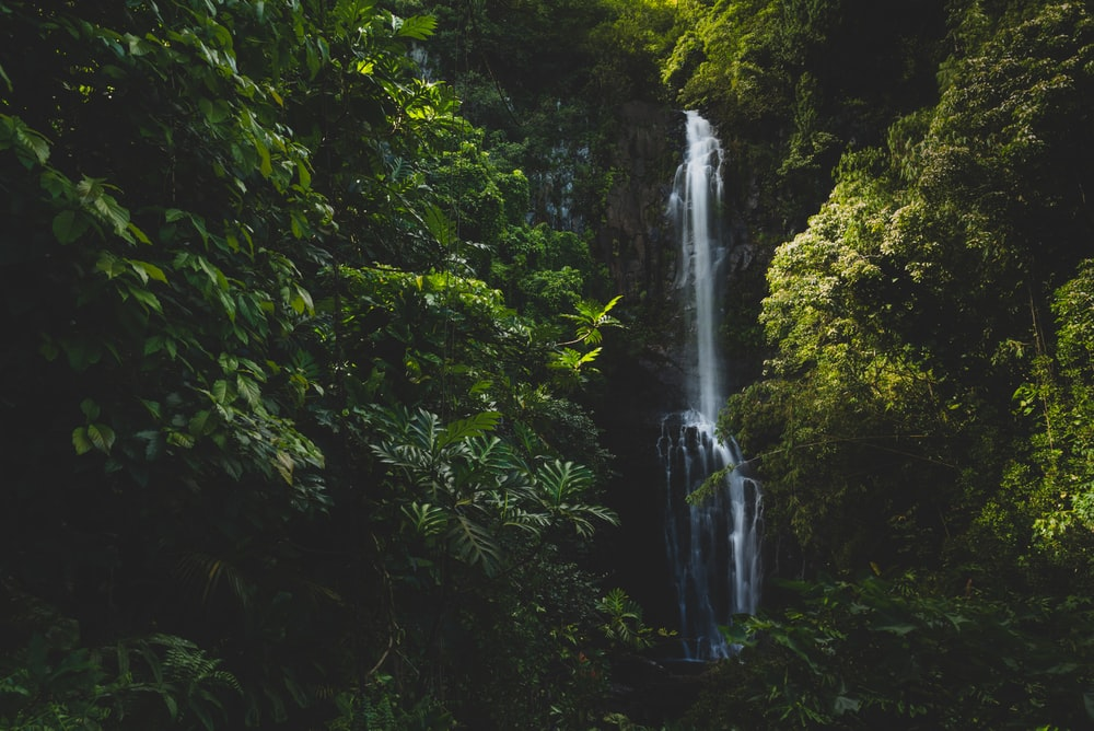 waterfalls surrounded of trees