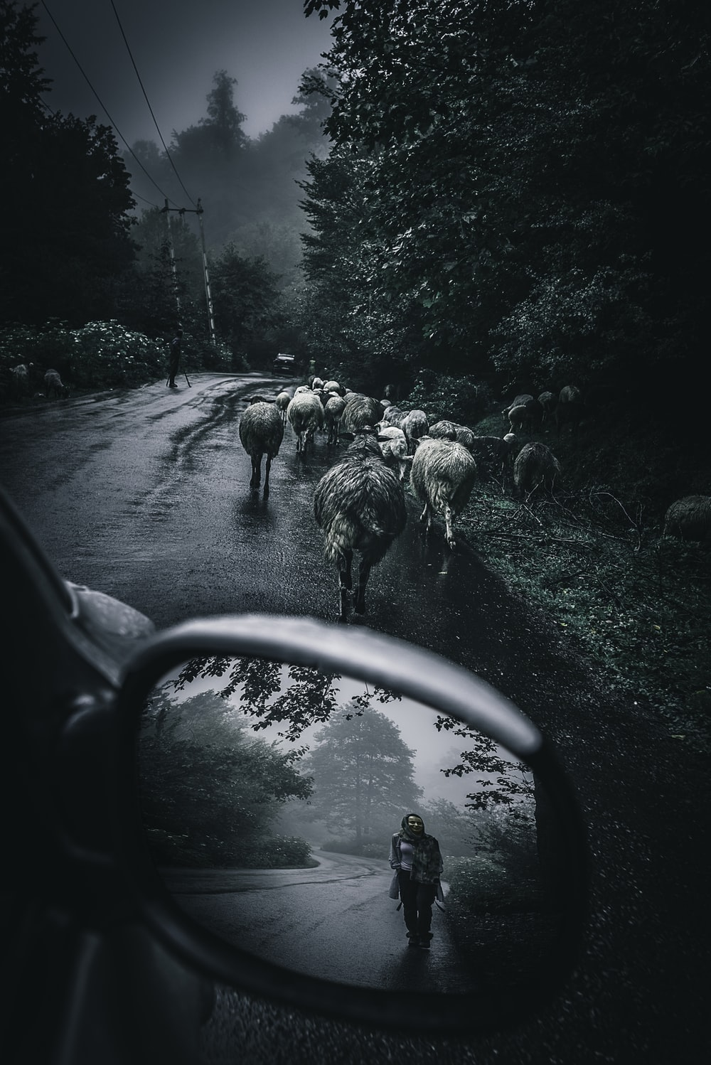 grayscale photo of sheep on road during daytime
