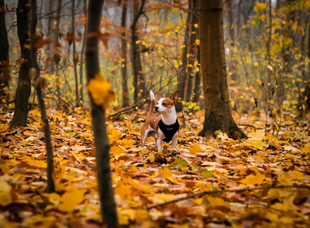 short-coated brown puppy inside forest