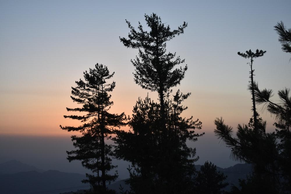 trees during sunrise