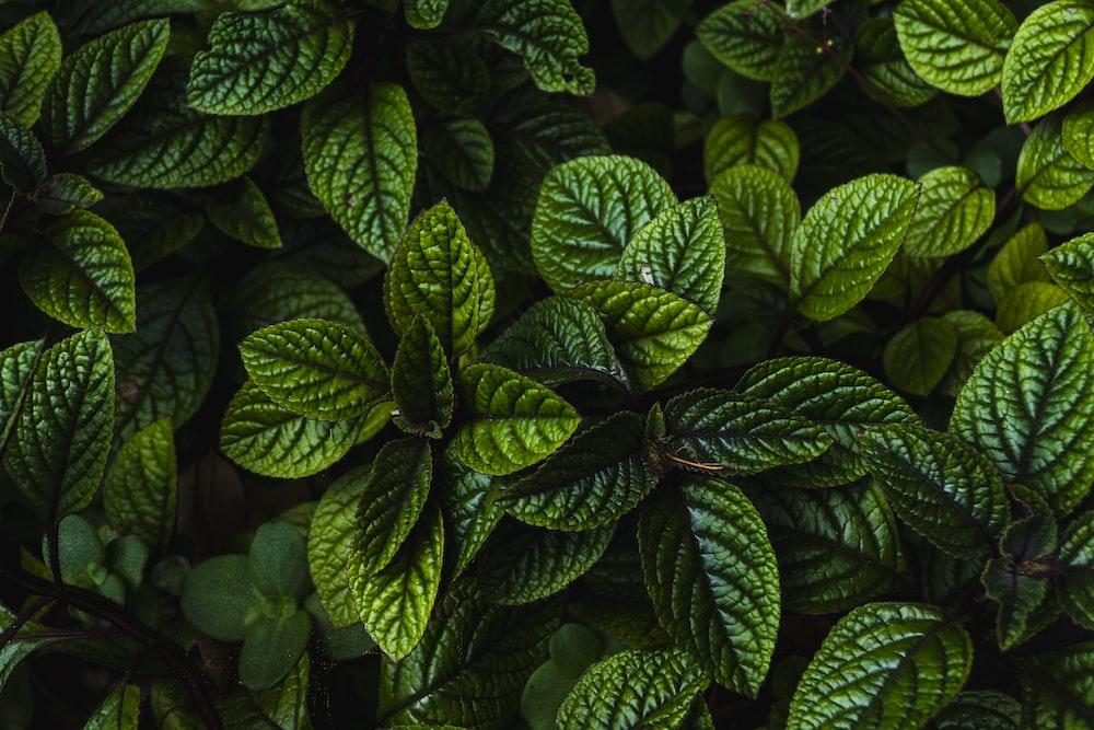 Hd Wallpaper For Desktop Green