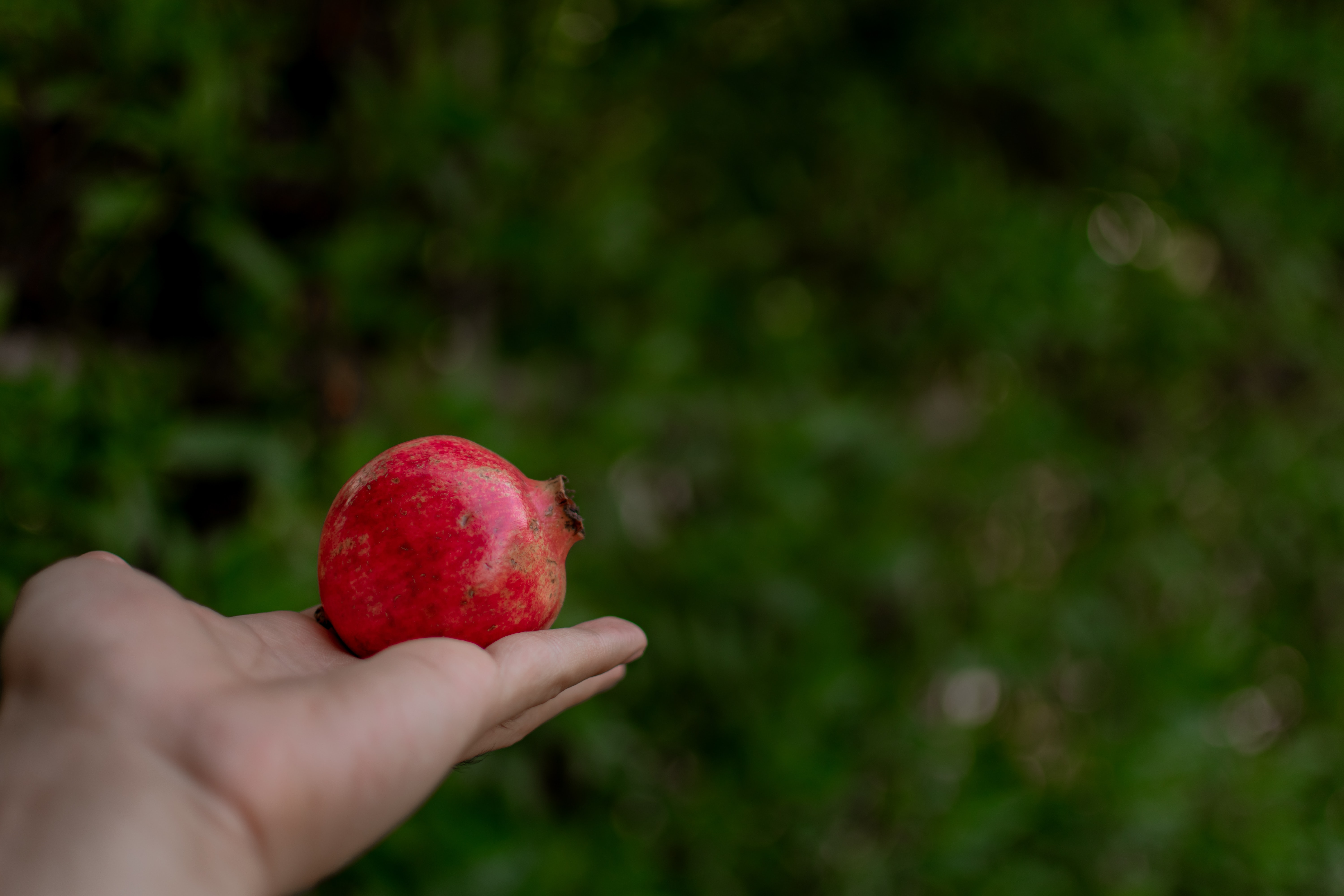 person holding pomegranate fruit