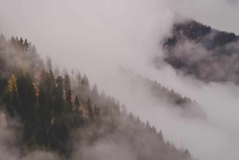 100 Stunning Misty Forest Pictures Download Free Images On Unsplash