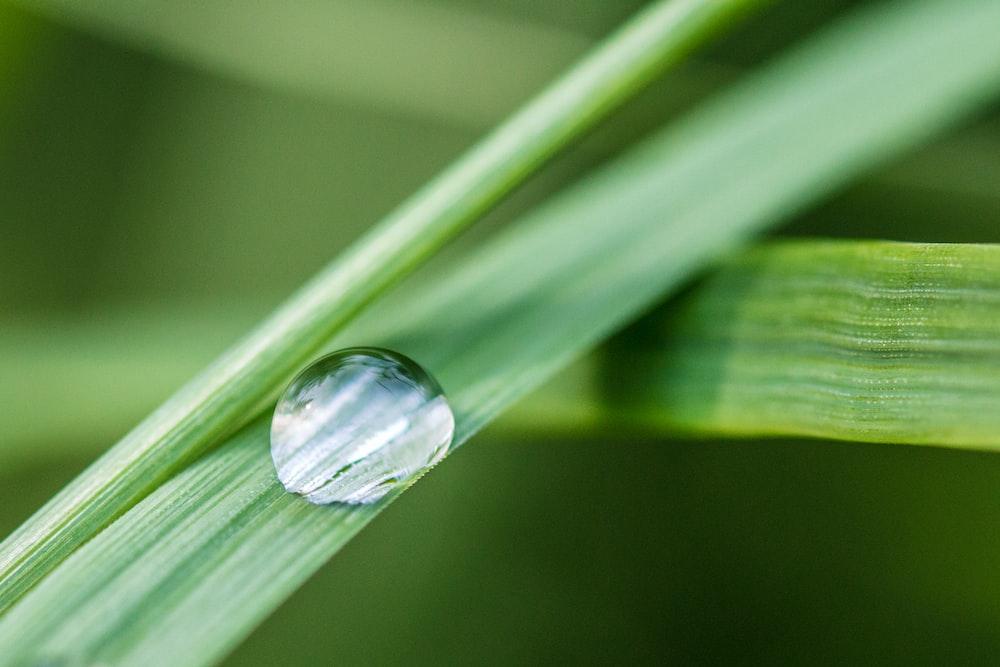 green-linear plant