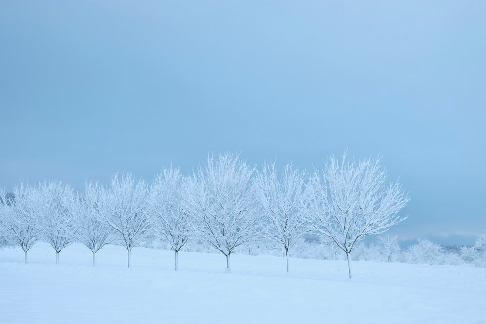snow covered trees and grounds