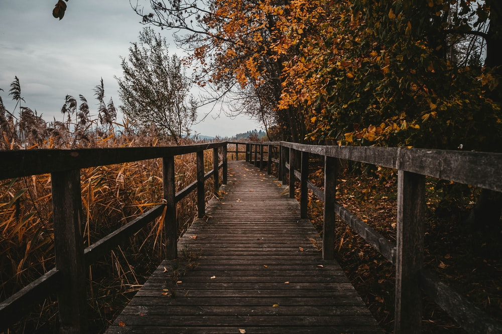 brown wooden walkway lined with brown leafy trees