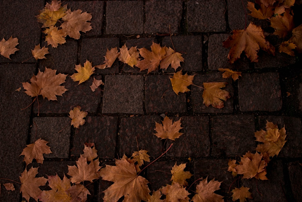 dried clover leaves on concrete pavement