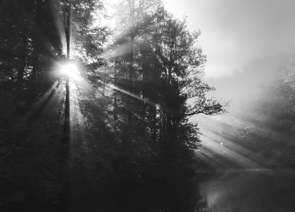 sunlight streaking through trees in foggy forest