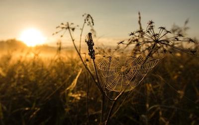 spider web on flower prairie teams background