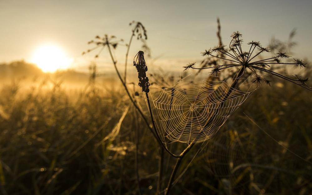 spider web on flower