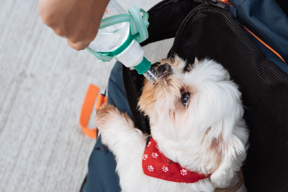 person holding green water dispenser with dog drinking on it