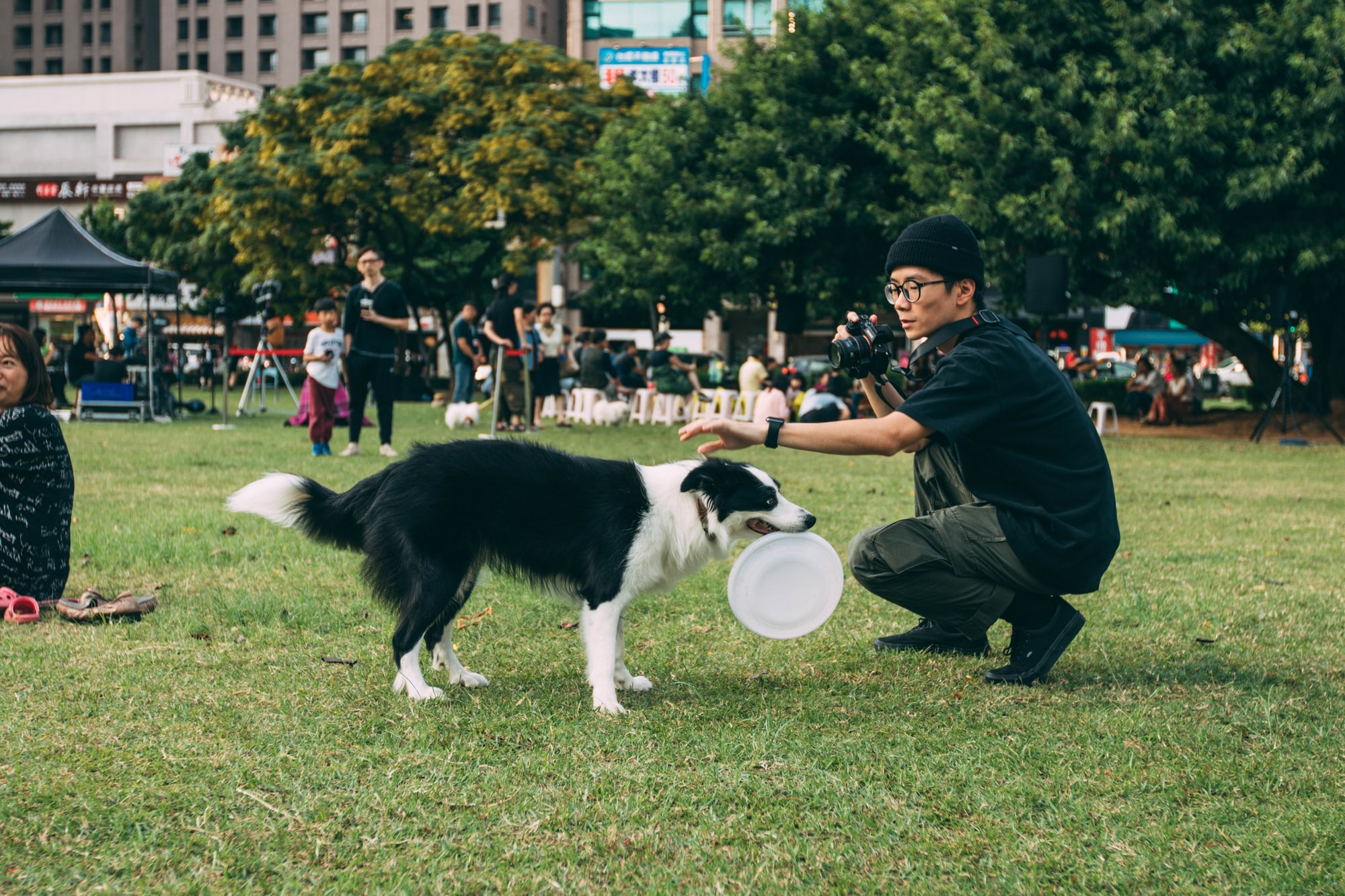 3 Incredible Benefits of Taking Your Dog to a Dog Trainer