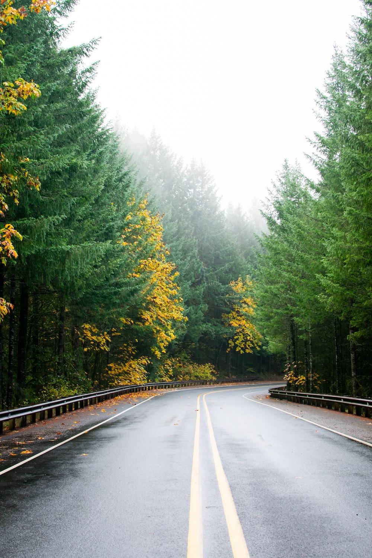 empty gray concrete road between trees