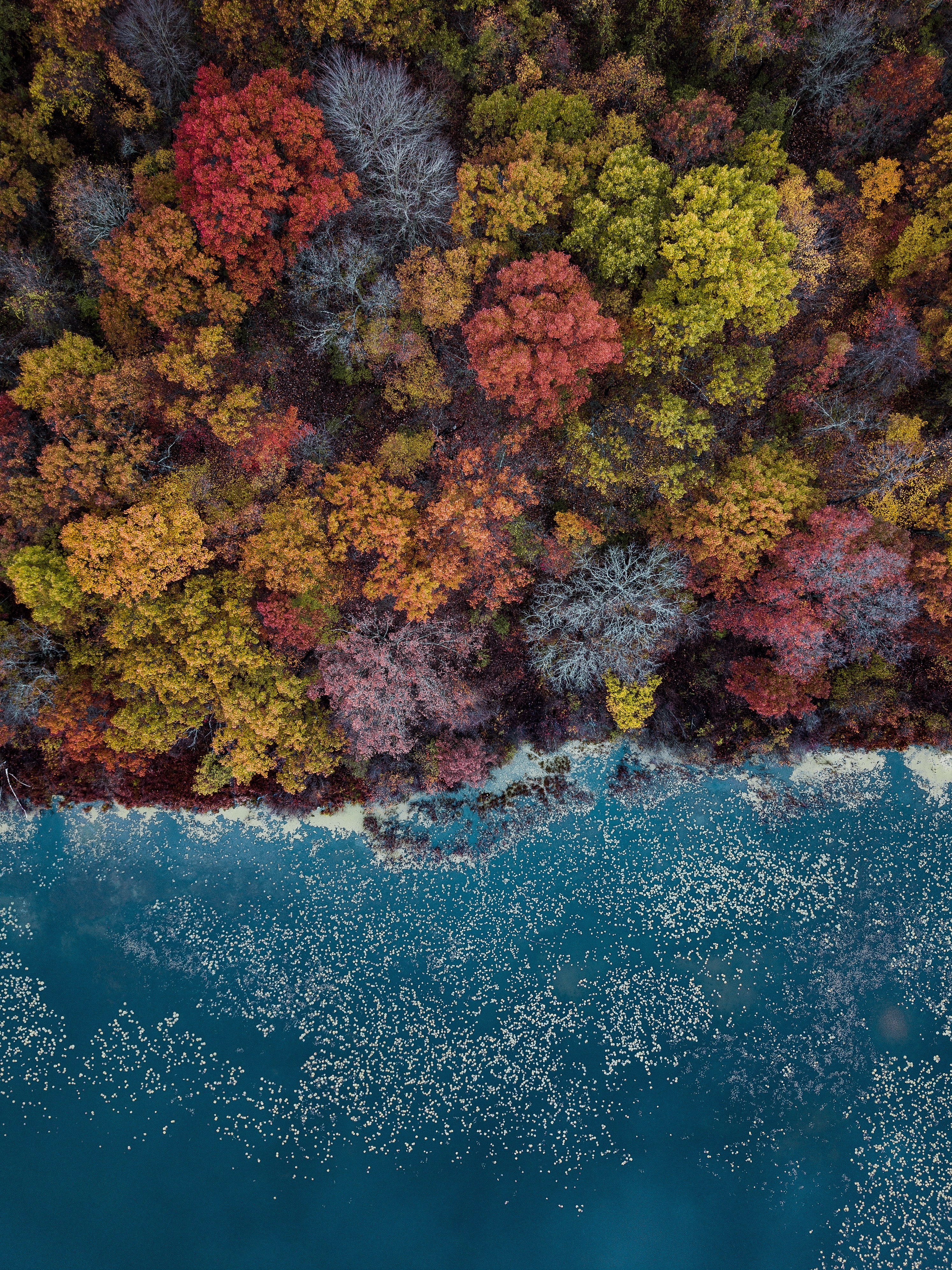 high-angle photography of assorted-colored trees during daytime