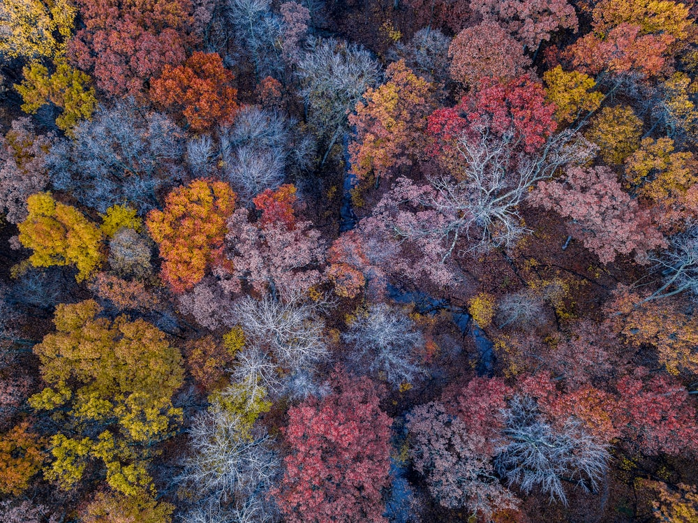 aerial photo of forest during the fall