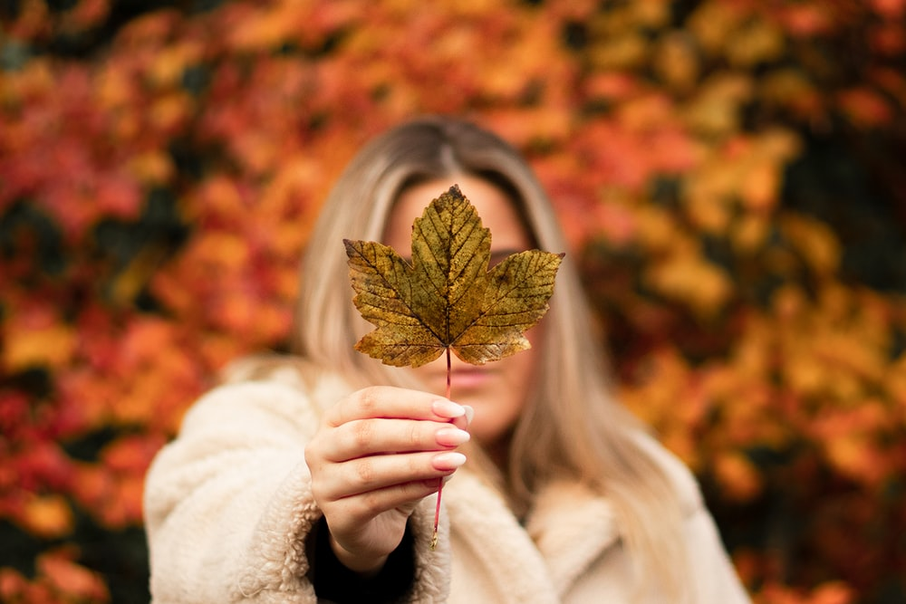 focus photography of woman holding maple leaf