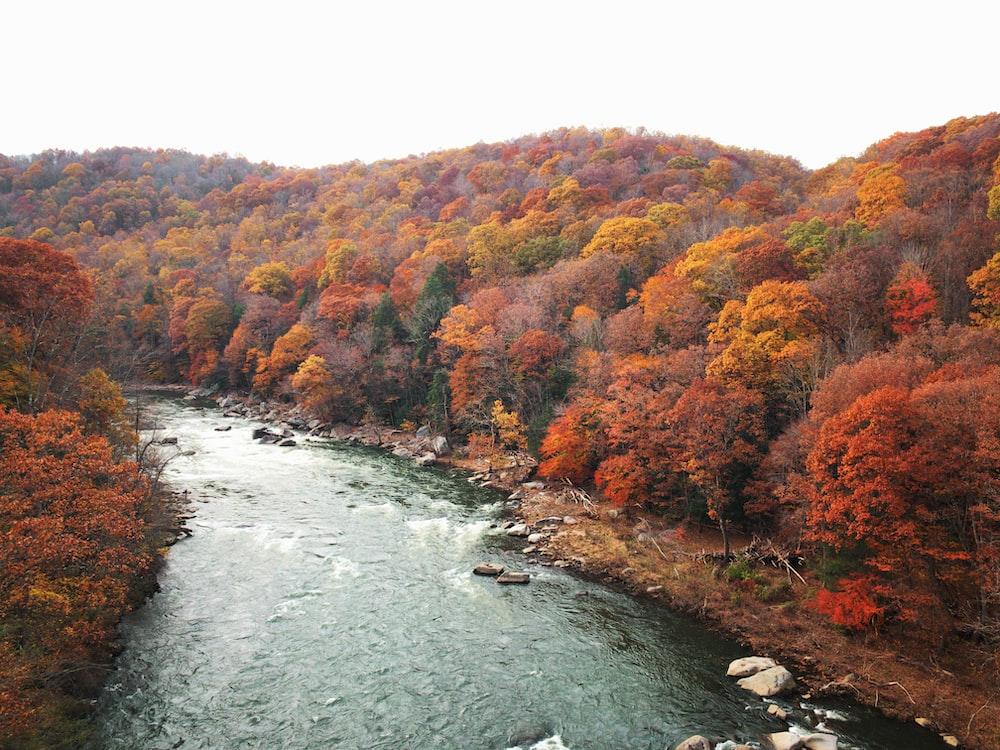 river in between orange-leafed trees during daytime