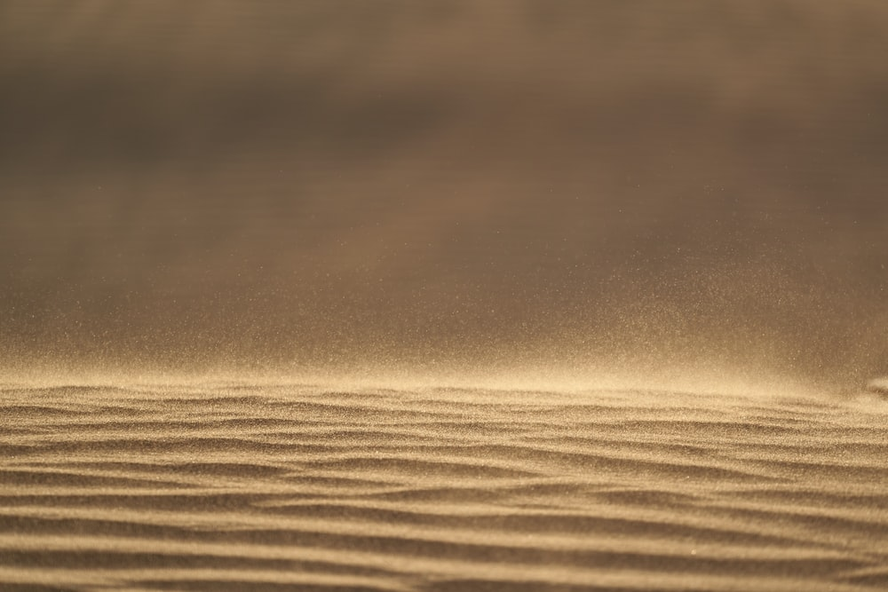 shallow focus photography of brown sand