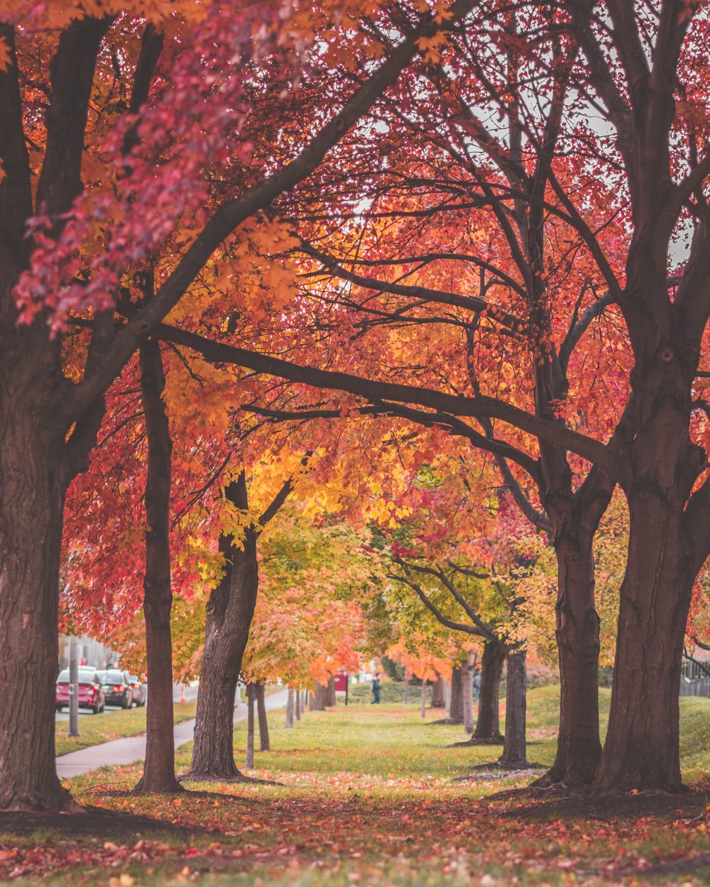 red tree tunnel during daytime