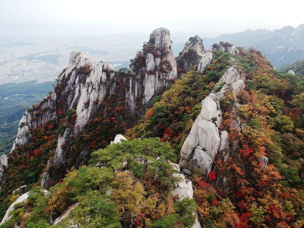 rock mountain terrain with tress