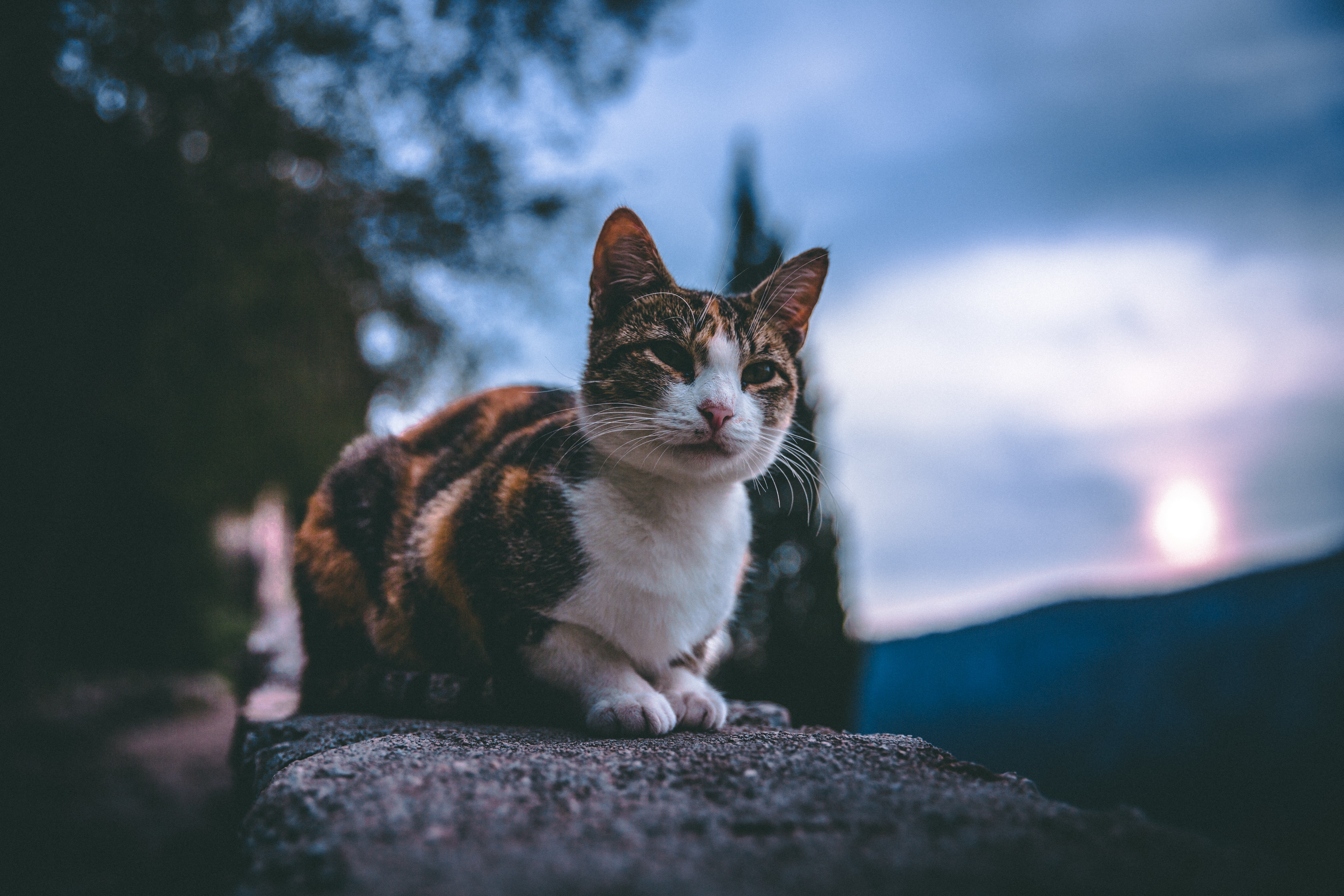 selective focus photography of black, white, and brown cat