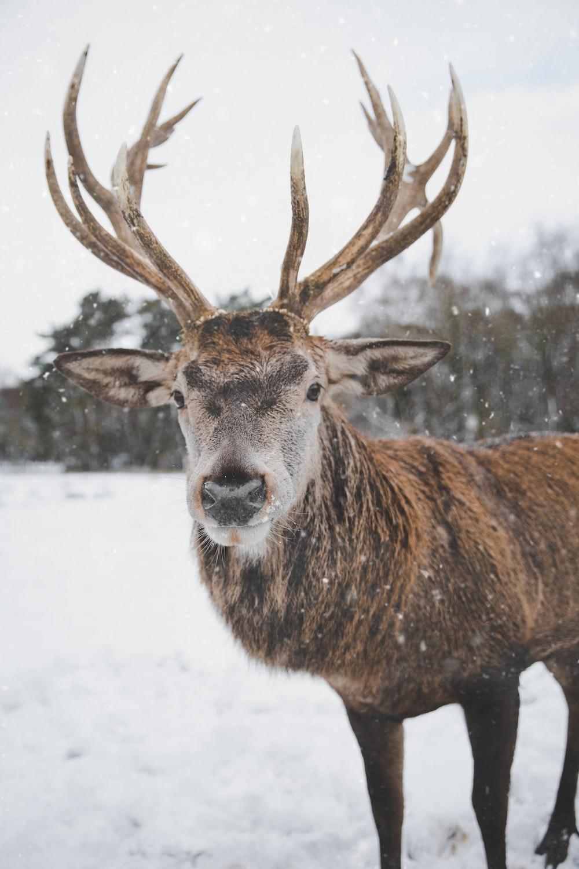 brown deer on snow field