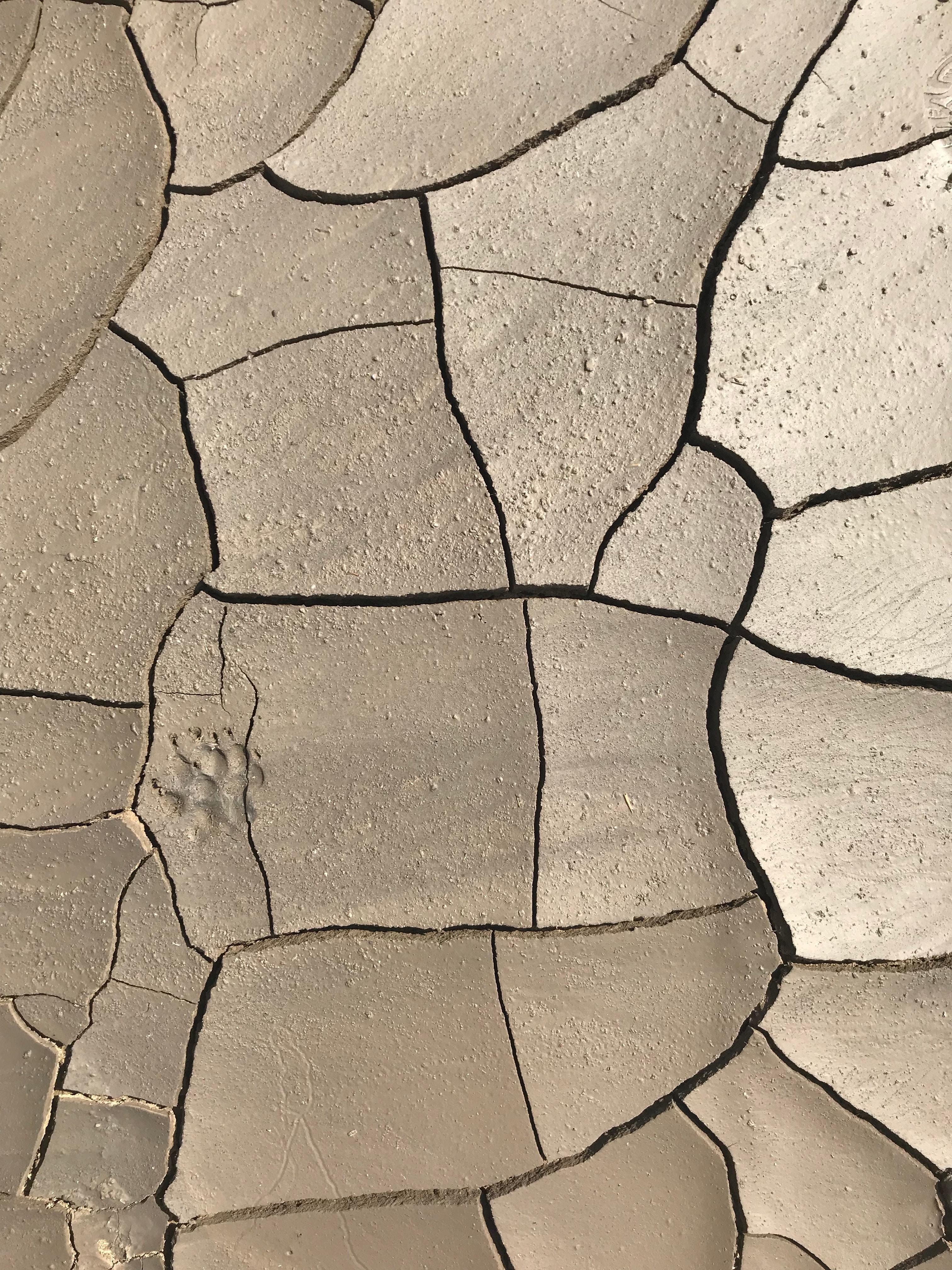 gray perched soil
