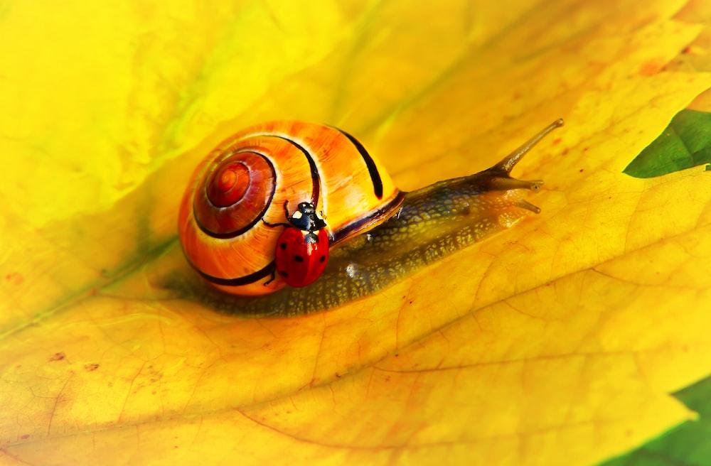 ladybug on yellow snail
