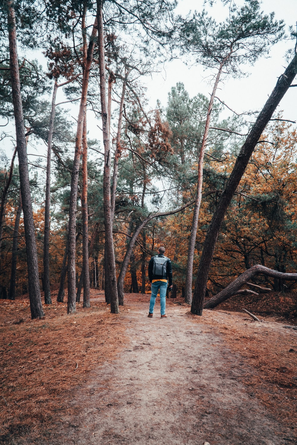 person standing in middle of woods during daytime