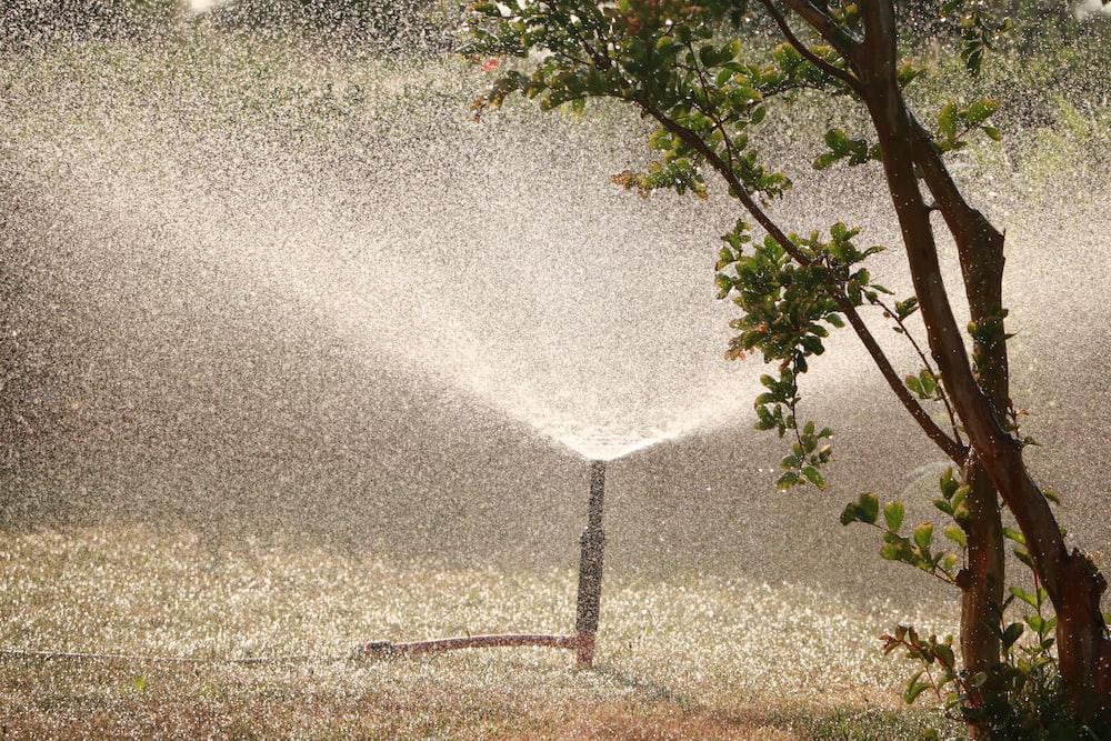 garden sprinkler beside tree