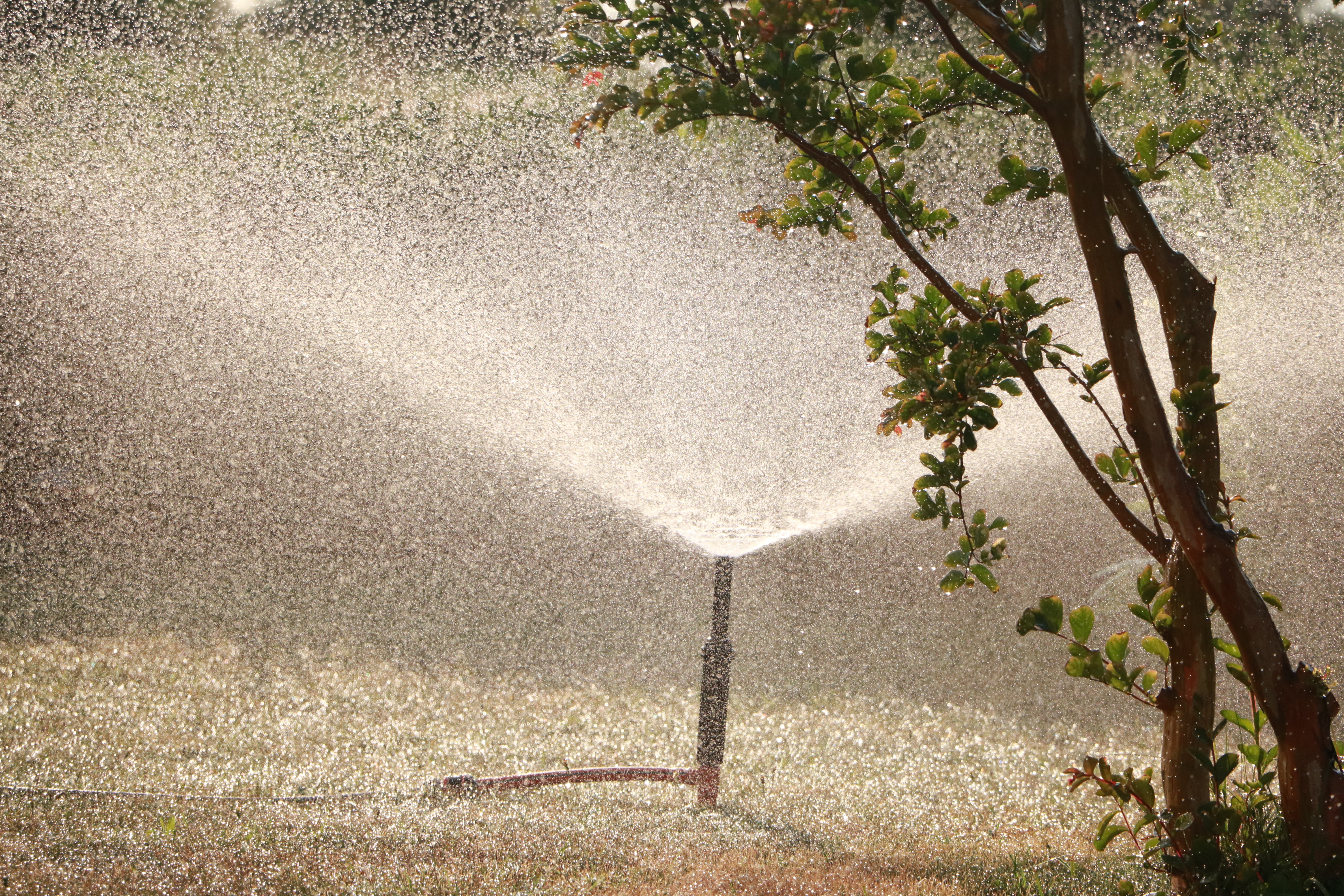 garden sprinkler beside tree